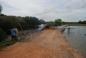 deforestazione mangrovie
