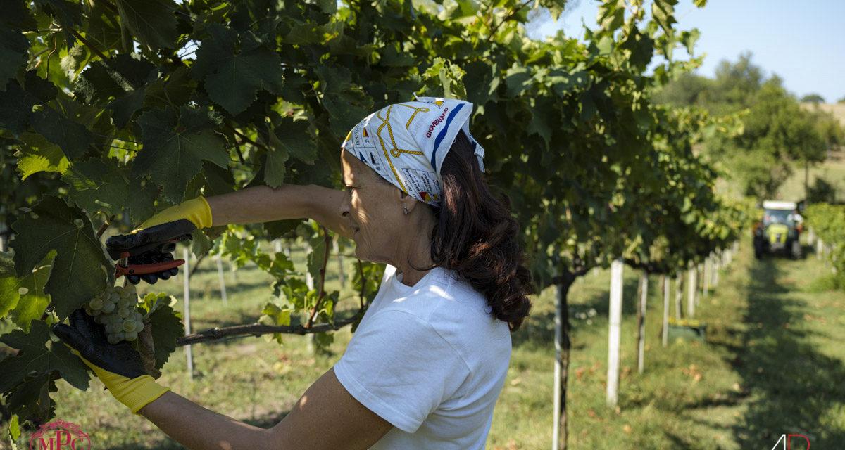 Se esiste un Santo nel mondo del vino, è di certo il Sant'Isidoro di Maria Pia Castelli