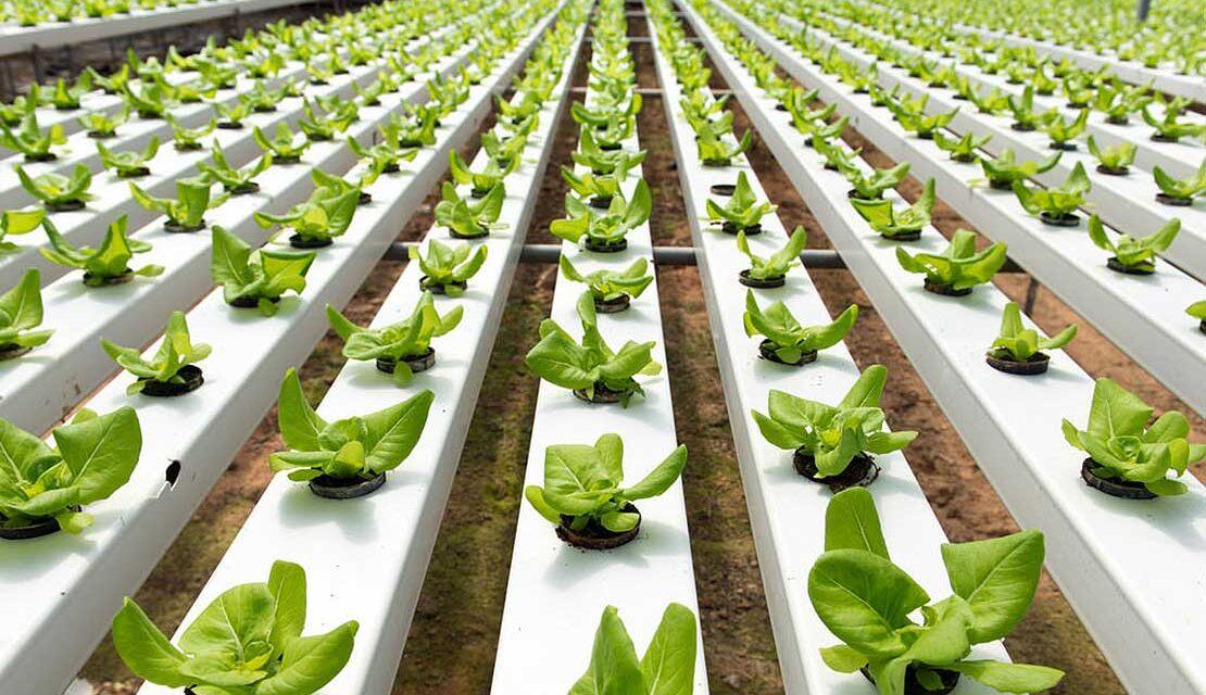 Agrifood Forum, il primo evento digitale dedicato all'alimentazione sostenibile
