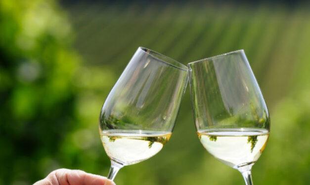 CANTINE APERTE  SI RIPARTE CON LA #winecation