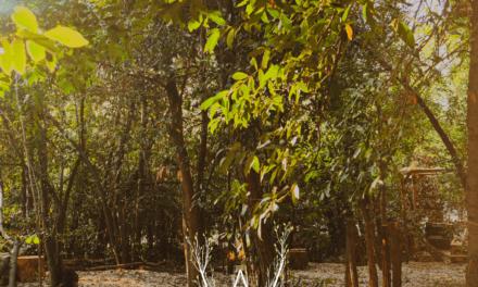 Wood Natural Bar, lo spazio green da cui ripartire