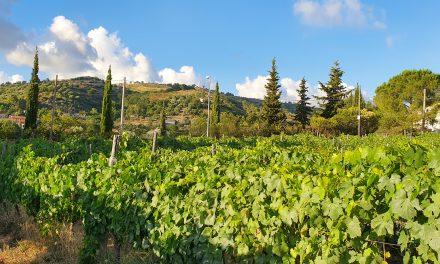 Casebianche – L'azienda vinicola del Cilento che innova nella tradizione